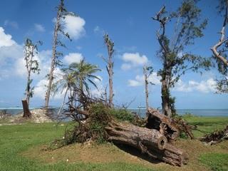 151026d_tree.JPG